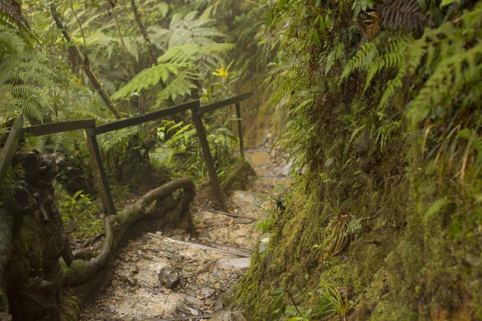 Rain forest path while climbing kinabalu