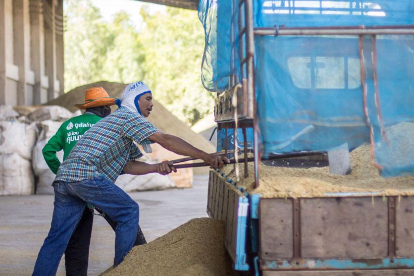 Visit Roi Et rice farming