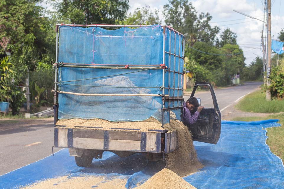 Visit Roi Et harvesting rice