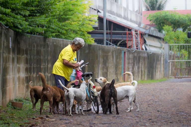 Bang Krachao Street Dogs