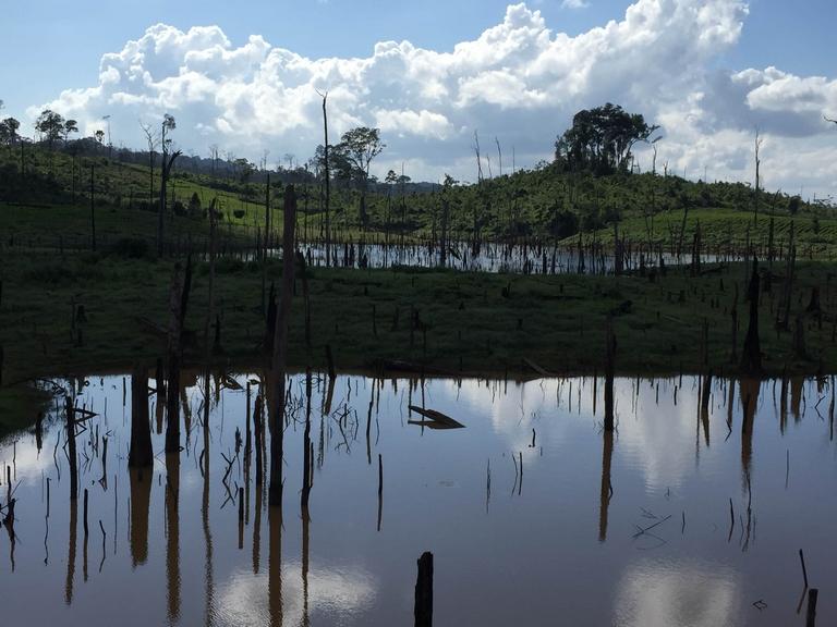 Swamps full of Dead Trees