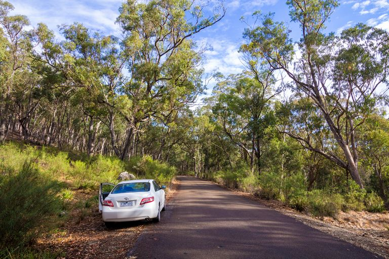 Winding through the forest on a Sydney to Melbourne Road Trip