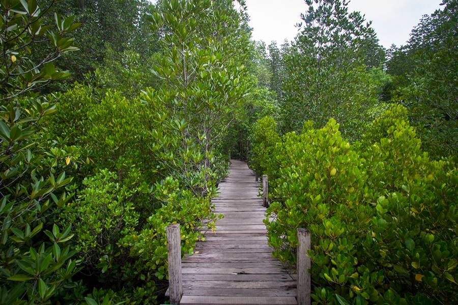 Thung Prong Thong Mangrove Forest