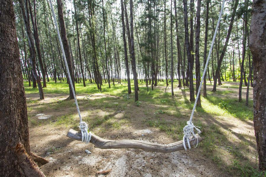 Swing on Koh Adang