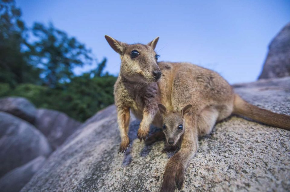8 Amazing Things to Do on Magnetic Island