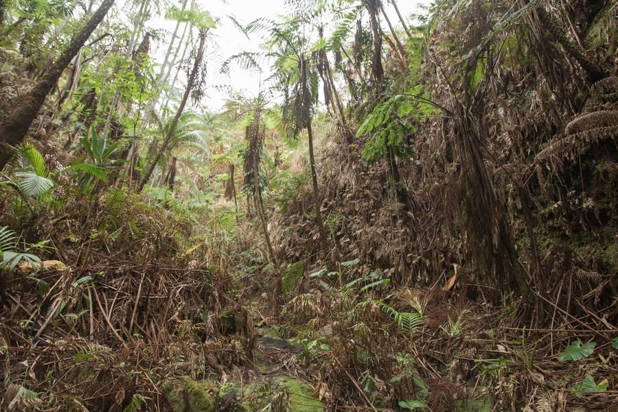 Ambrym Volcano Hiking Trail
