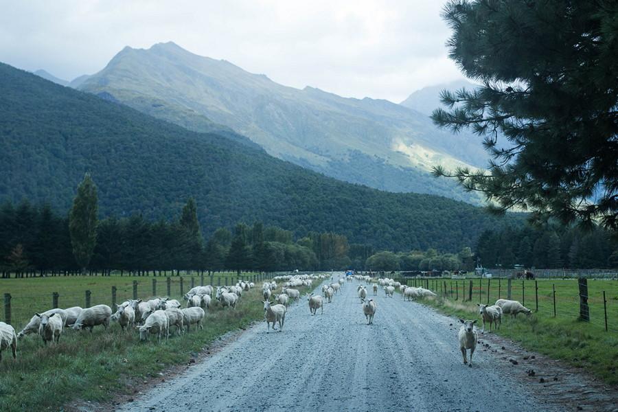 Wanaka Mount Aspiring Road