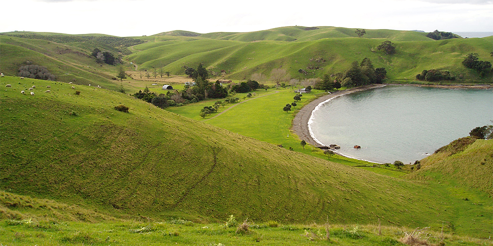 Motutapu Island - Rolling Hills Surround The Reid Homestead at Home Bay (NZ DOC)