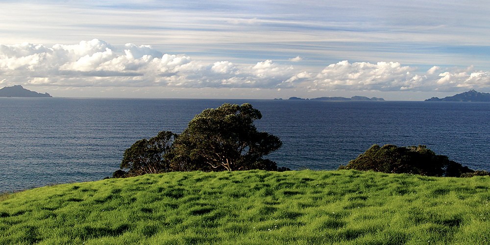 Rotoroa Island - Looking Out Over the Waitemata Harbour (Nathan Hayes)