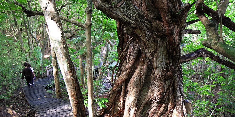 Tiritiri Matangi Island - Bush Walk (Nathan Hayes)