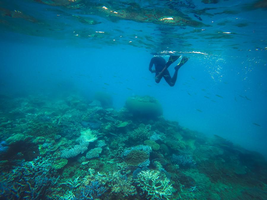 Snorkeling at Barefoot Manta